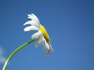 flower-204857_1920